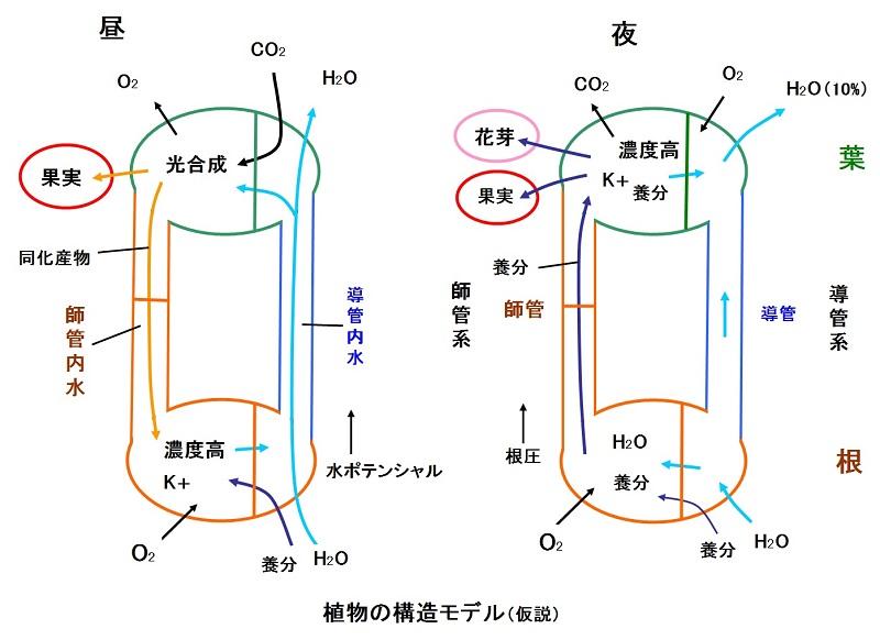 植物の構造1